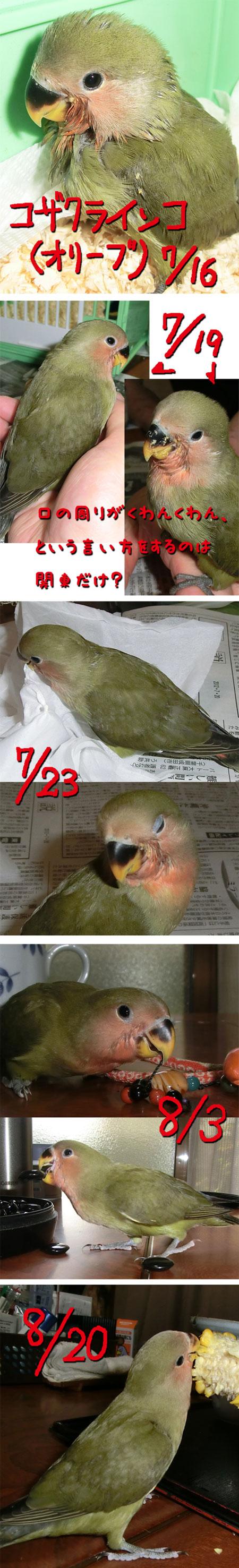 n_120825_1.jpg