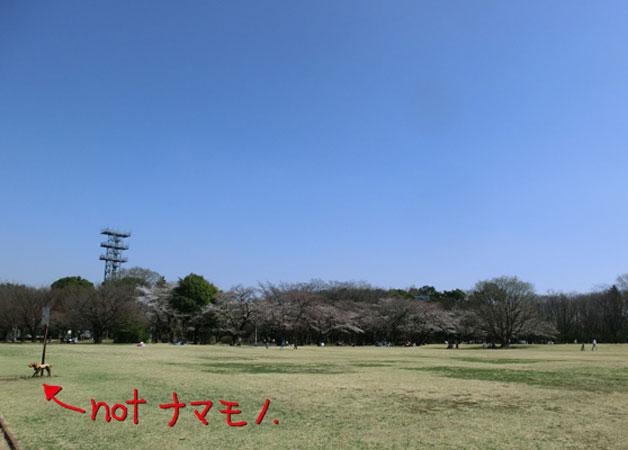 n_130322_2.jpg